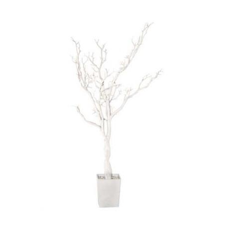 L'arbre à voeux blanc en pot