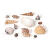 L'assortiment de coquillages naturels