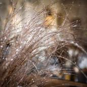 La branche pailletée cuivre
