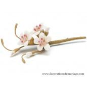 Le brin de fleur de cerisier