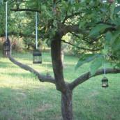 Décoration mariage oiseaux : décoration en extérieur