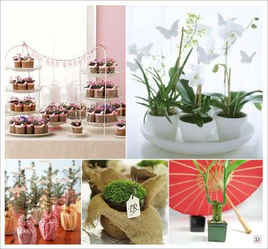 cadeaux invites mariage plante orchidee bambou