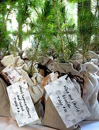 arbuste cadeau invité mariage original