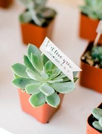 pot succulente cadeau invité mariage vert