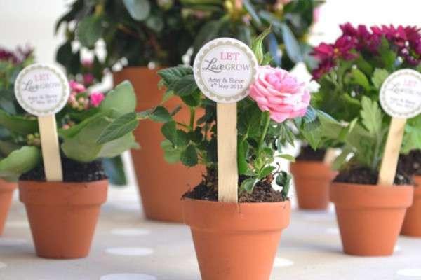 cadeau invité mariage champetre plantes en pot
