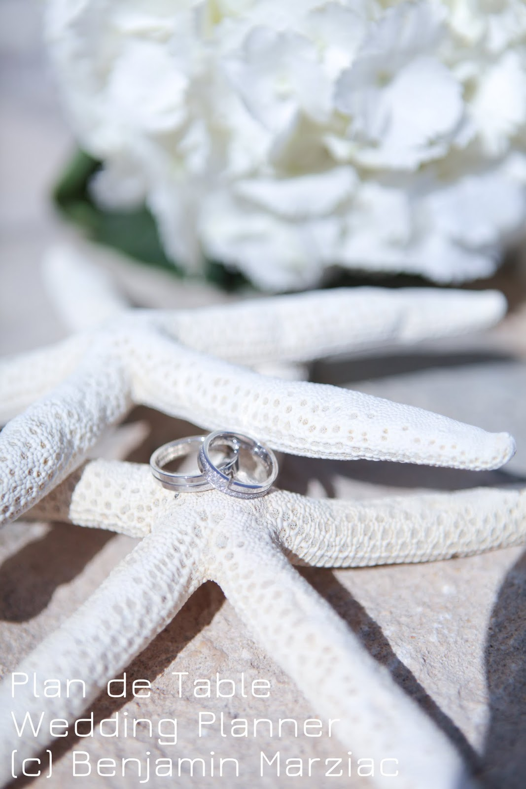 decoration mariage mer alliances etoile de mer